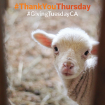 Thank You Thursday - 6 - Facebook